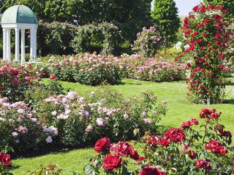 Aiuole giardino con rose