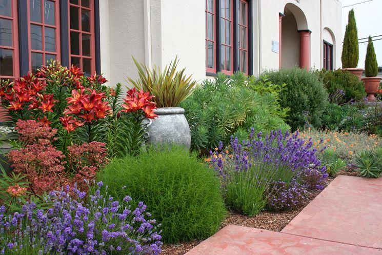 Erbe aromatiche giardino