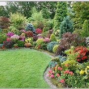 Varietà di piante da giardino