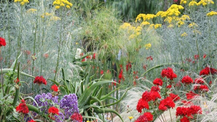 Piante per il giardino mediterraneo
