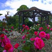 Giardino di rose esempio