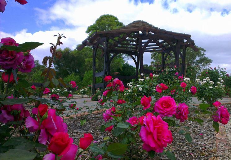 Giardino di rose tipi di giardini come realizzare e curare