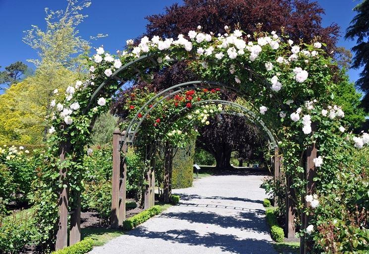giardino rose rampicanti