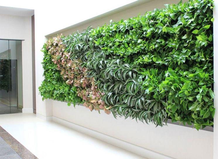 parete con piante