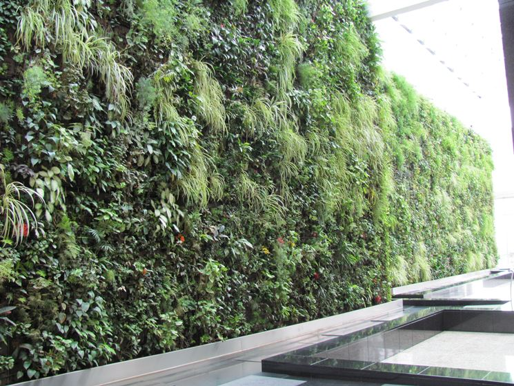 parete verticale verde