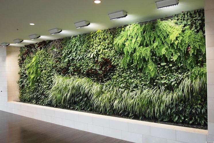 insieme di piante su una parete