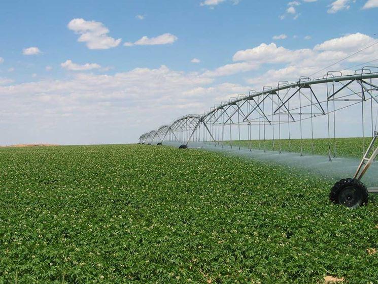 Irrigazione a pioggia in agricoltura