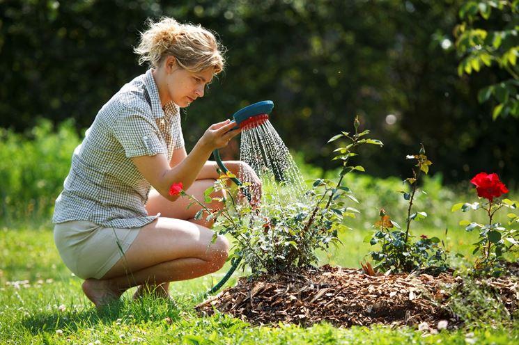 irrigazione fai da te