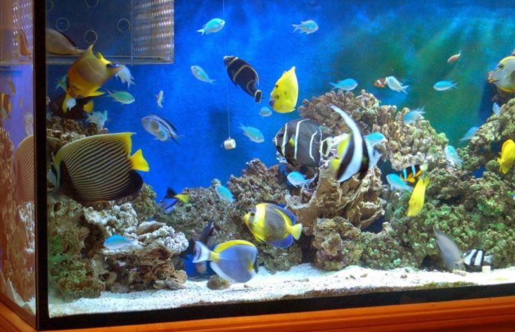 Acquario allestimento accessori casa decorazione acquari for Acquario in casa
