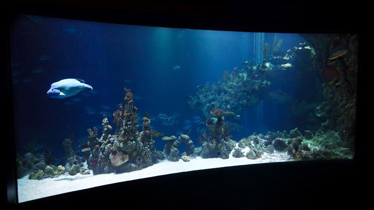 Acquario con pesci e coralli