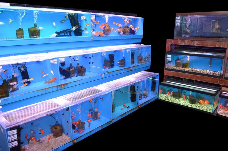 Allestire un acquario accessori casa allestimento acquario for Tropical fish shop