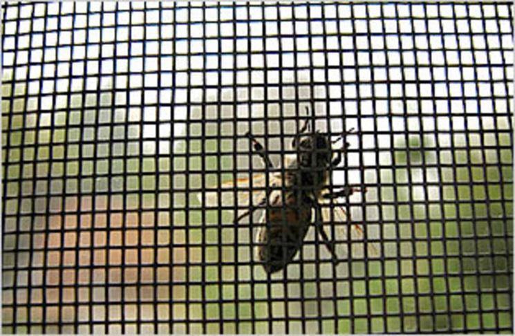 Dettaglio di zanzariera con insetto