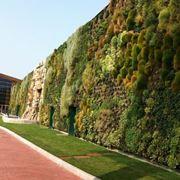Esempio di muro verde