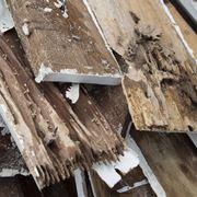 Termiti legno