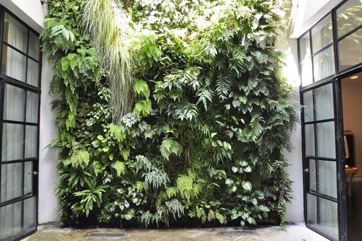 Realizzare muro vegetale