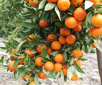 Piante da frutta